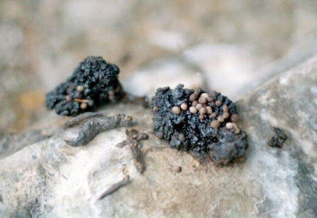 Полезные свойства мумие и противопоказания к использованию, правила применения мумие.
